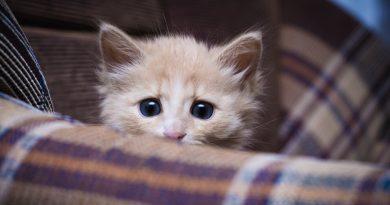 Cat Anxiety