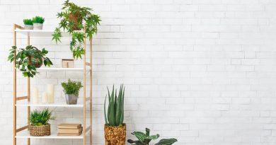 Decorative Wall Designs Online